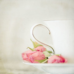 teacup squared photo by Kim Klassen