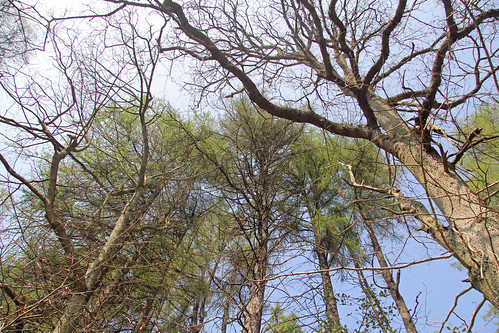 Dalby Forest Treetops