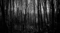 The Dark Dark Woods photo by joe_relic37