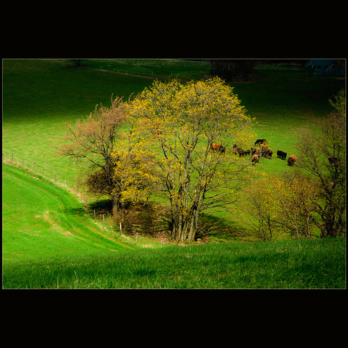 Spring pasture photo by dellafels