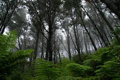 Ferny forest photo by Johan_Leiden