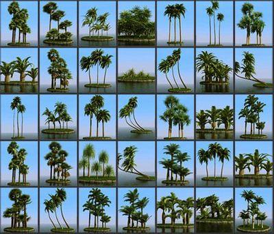 palmas 3d