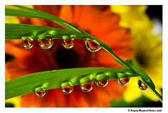 Multiple water drop macro photo by Royally Morphed Pythons
