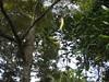 5505993607_cd9e3625d7_t