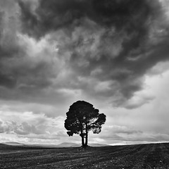 The Lonely Tree photo by DavidFrutos