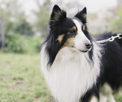 a gentry dog photo by eraplatonico