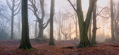 Misty Woodland photo by jactoll