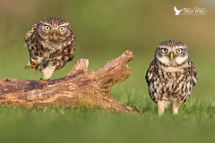Pair Of Grumps lol .... photo by Steve Ward Nature
