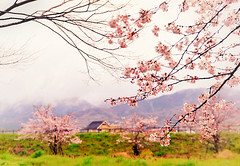 A sight in pastel colors photo by y2-hiro