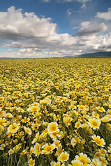 Field of Dreams - Carrizo Plain National Monument photo by Joshua Cripps