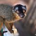 Madagascar-104