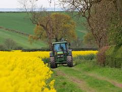 mellow yellow work photo by johnb/Derbys/UK.