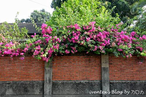 26_台南321巷藝術聚落