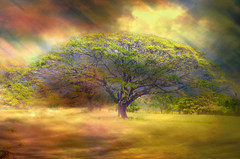 Hawaiian Tree photo by Artypixall