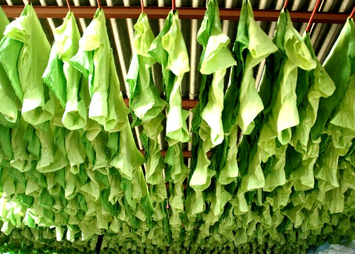 Blouses. Green- DYEING - Dharavi.