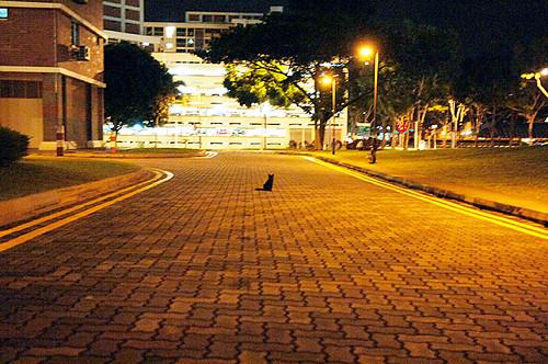 Hougang - Meow