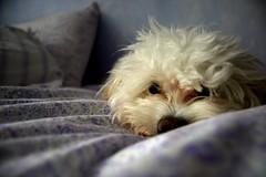 Wink naps