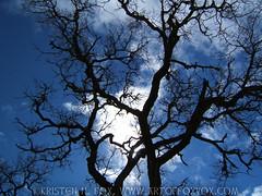 Crazy Tree Silhouette