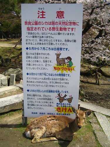 deer in front of the warning sign