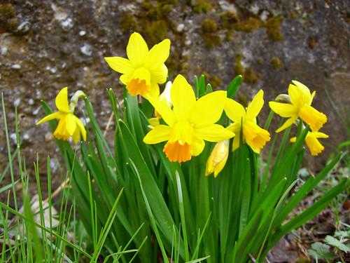Bourgeons Et Fleurs D Avril Moinillon Au Quotidien