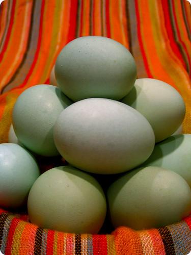 Araucana Easter eggs