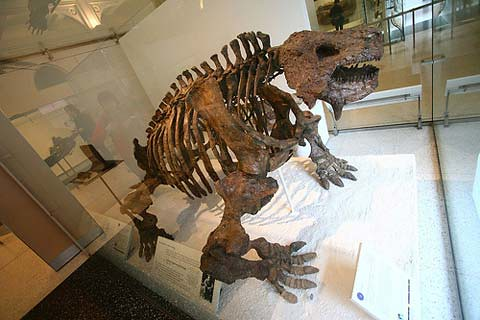 Scutosaurus. Foto de BioMaxi