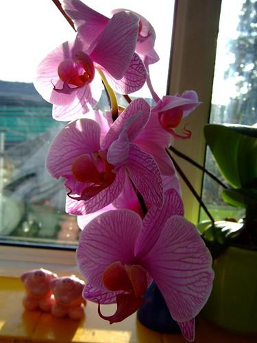 01orchids