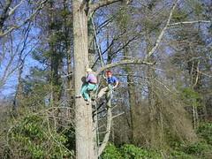 tree climbing 019