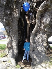 inside_big_tree
