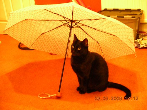 I heart brolly