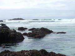 Bird Rock - Coast