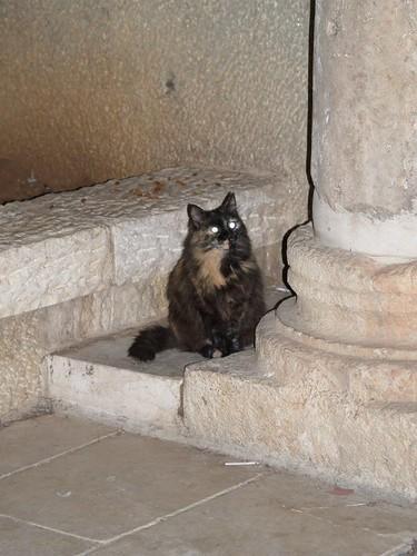 cat 5/248