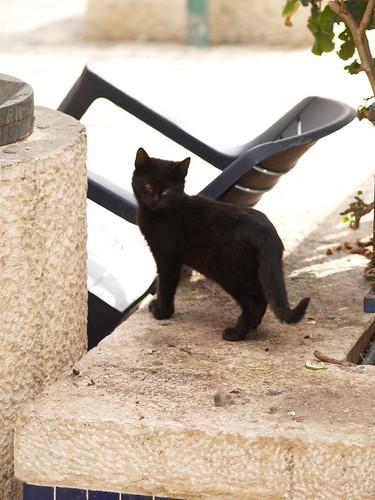 cat 16/248