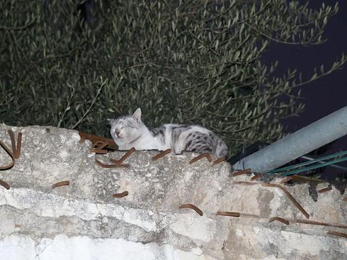 cat 22/248