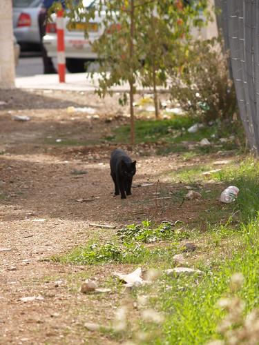 cat 66/248
