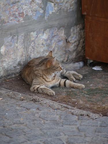 cat 78/248
