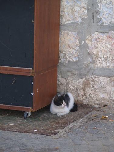 cat 83/248