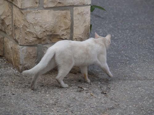 cat 144/248