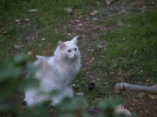cat 168/248