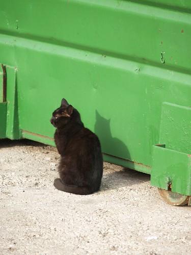 cat 206/248