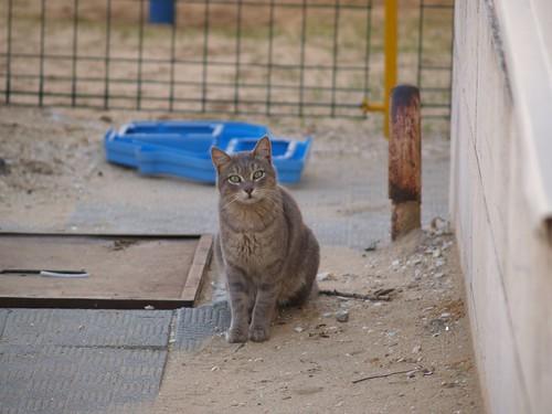 cat 220/248