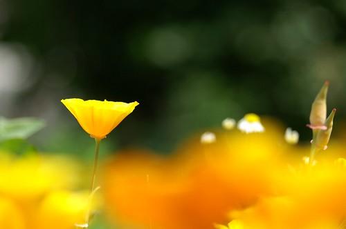 Spring flowers 10