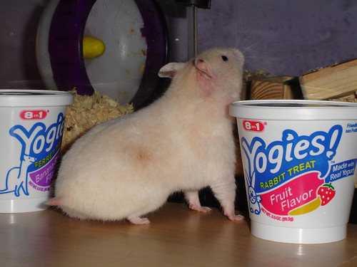 Honey's yogies