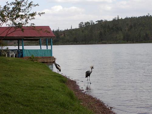 bird and gazebo on Jambo Beach