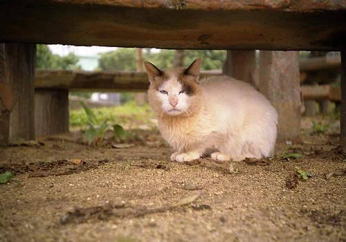 目つき悪猫