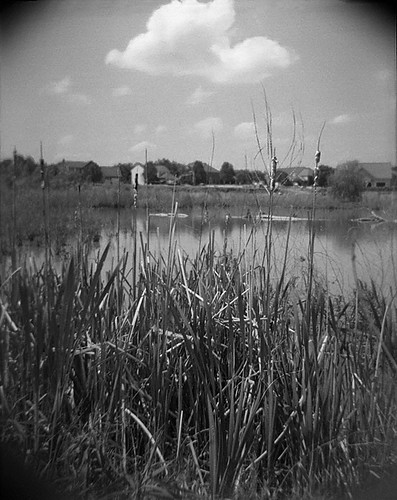 pond reeds and sky