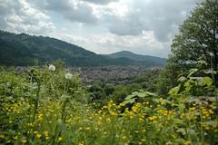 Freiburger Osten 1