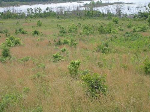 Black Prairie Grasslands.JPG