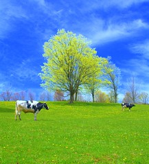 Peaceable Pasture (a.k.a. Bovina Spring) photo by William  Dalton
