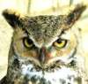 Web Owls Website